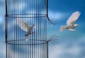 Se libérer de ses programmes inconscients, comme une colombe qui se libère de sa cage
